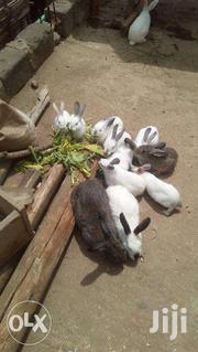 Hybrid Rabbits | Livestock & Poultry for sale in Homa Bay, Mfangano Island