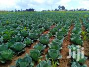 5 Acres Land | Land & Plots For Sale for sale in Nyandarua, Nyakio