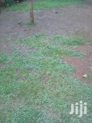 Land For Sale   Land & Plots For Sale for sale in Busia, Marachi Central