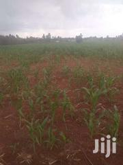 Land 20 Acres In Moiben 700k Per Acre | Land & Plots For Sale for sale in Uasin Gishu, Moiben