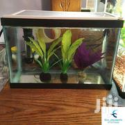House Hold Aquarium | Pet's Accessories for sale in Nairobi, California