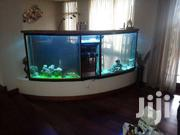 Large Aquariums, Ponds And Water Features | Fish for sale in Nairobi, Nairobi Central