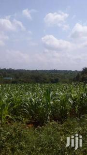 Silage Fodder | Feeds, Supplements & Seeds for sale in Kirinyaga, Kiine