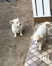 Puppies | Dogs & Puppies for sale in Kajiado, Ngong