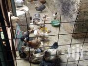 Poultry | Livestock & Poultry for sale in Mombasa, Magogoni