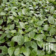 Treetomato Seedlings | Meals & Drinks for sale in Nakuru, Molo