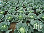 Cabbages In Bulk | Meals & Drinks for sale in Nakuru, Naivasha East