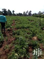 Land In Sirende Two Acres | Land & Plots For Sale for sale in Trans-Nzoia, Sirende
