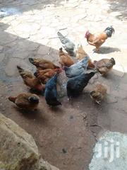 Margaret From Maragua | Other Animals for sale in Murang'a, Ichagaki