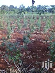 Agricultural Land On Sale | Land & Plots For Sale for sale in Nyeri, Karatina Town