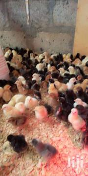 Kroillers | Livestock & Poultry for sale in Kericho, Chepseon