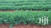 15 Acres Farmland At Embu Mbeere For 450K Per Acre | Land & Plots For Sale for sale in Embu, Mbeti South