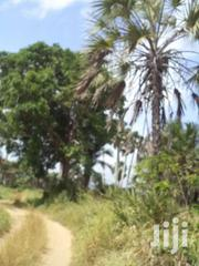 A Quarter  Of An Acre Behind Diani Beach For Sale! | Land & Plots For Sale for sale in Kwale, Kinondo