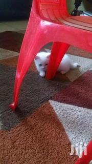 One Month Kittens | Cats & Kittens for sale in Nairobi, Kahawa West