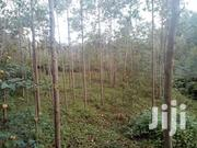 200 By 700 | Land & Plots For Sale for sale in Kisii, Bosoti/Sengera