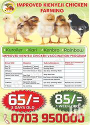 IMPROVED KIENYEJI CHICKS | Livestock & Poultry for sale in Nairobi, Roysambu