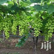 Grapes Green Variety | Home Accessories for sale in Machakos, Syokimau/Mulolongo