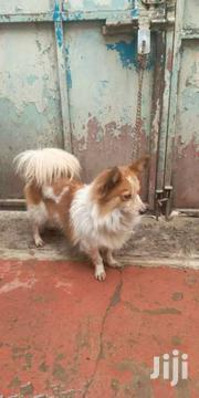 Dog for Breed | Dogs & Puppies for sale in Nairobi, Umoja II