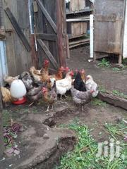 Kienyeji | Livestock & Poultry for sale in Nakuru, Menengai West