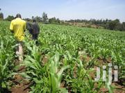 40 By 80 Plot For Sale At Kagoto Nakuru | Land & Plots For Sale for sale in Nakuru, Kiamaina