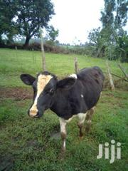 Fresian Calf | Other Animals for sale in Nairobi, Nairobi Central