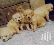Golden Retriever For Sale | Dogs & Puppies for sale in Nairobi, Kahawa West