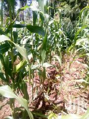 Selling Agricultural Land | Land & Plots For Sale for sale in Murang'a, Kamahuha