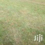 Need Land In Malaba-kakamega | Land & Plots For Sale for sale in Kakamega, South Kabras