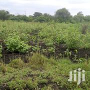 THIS IS A VERY FERTILE 1 ACRE PIECE OF LAND WITH ORIGINAL TITLE DEED | Land & Plots For Sale for sale in Machakos, Ndalani