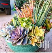 Natural Indoor And Outdoor Plants And Flowers Potted And Succulent | Garden for sale in Machakos, Syokimau/Mulolongo