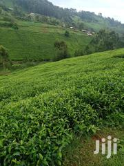 Tea Estate On Sale   Land & Plots For Sale for sale in Murang'a, Kangari