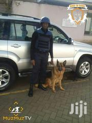 Dog Handler/Trainer | Pet Services for sale in Kakamega, Mumias Central