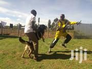 Dog Trainer | Pet Services for sale in Vihiga, Central Maragoli