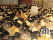Genuine Ug Kuroiler Chicks Improved Kienyeji | Birds for sale in Nairobi, Nairobi Central