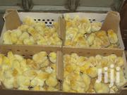 Cockerel Jogoo Chicks | Birds for sale in Nairobi, Nairobi Central