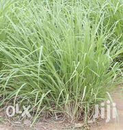 Lemon Grass Splits | Feeds, Supplements & Seeds for sale in Homa Bay, Mfangano Island