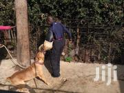 Dog Trainer | Pet Services for sale in Bungoma, Kimilili