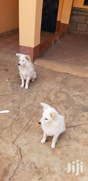 A Japanese Puppy | Dogs & Puppies for sale in Nairobi, Roysambu