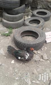 Local Ducks For Meat | Birds for sale in Nairobi, Embakasi