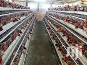 Poultry Cages | Pet's Accessories for sale in Machakos, Syokimau/Mulolongo
