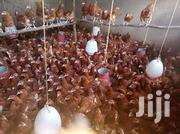 Chicken Battery Cages | Farm Machinery & Equipment for sale in Nairobi, Kasarani
