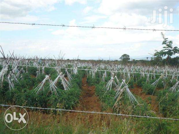 Archive: Acres 600 Available For Lease At Lengenet Near Kabarak With Molo River