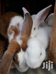 Rabbits For Sale | Livestock & Poultry for sale in Mombasa, Ziwa La Ng'Ombe