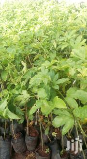 Passion Seedlings | Feeds, Supplements & Seeds for sale in Nairobi, Mwiki