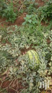 Ngoliba Plots Near Dillion's Hotel,Red Soil, 50x100 | Land & Plots For Sale for sale in Kiambu, Ngoliba