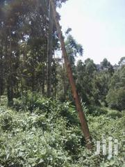 60 By 200 Land On Offer In Ruaka Kigwaru | Land & Plots For Sale for sale in Kiambu, Muchatha