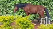 Trained Horses For Sale | Other Animals for sale in Kiambu, Riabai