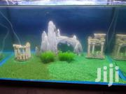 Aquarium And Its Decor | Fish for sale in Nairobi, Nairobi Central
