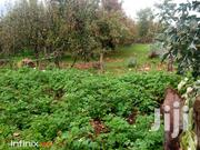 Nyandarua Shamba- 1 Acre | Land & Plots For Sale for sale in Nyandarua, Mirangine