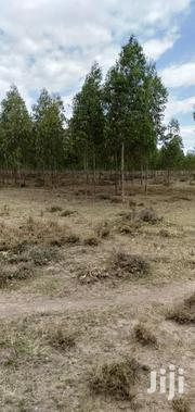 Agricultural Acres For Sale | Land & Plots For Sale for sale in Nyeri, Naromoru Kiamathaga